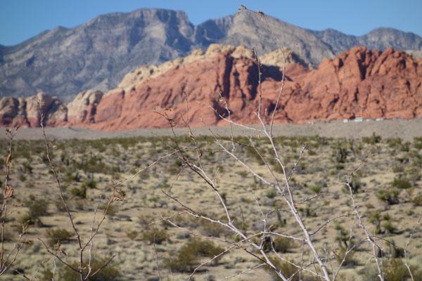 Parque Spring Preserve em Las Vegas