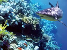 Uma atração imperdível: Shark Reef
