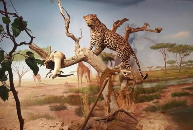 The Las Vegas Natural History em Las Vegas